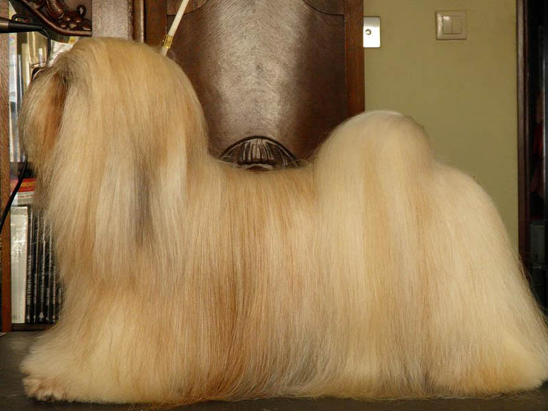 Best dog shampoo and conditioner for Shih Tzu
