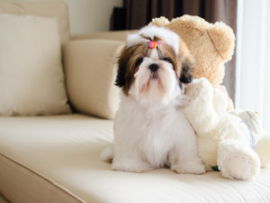 Food for Shih Tzu with allergies