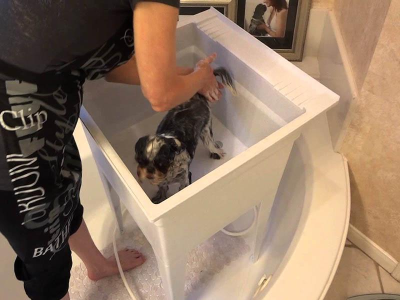 Shih Tzu shampoo and conditioner