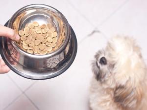 Best dog food Shih Tzu