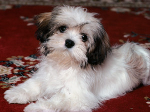 Cute Shih Tzu names female
