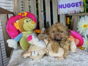 Cute dog names for a girl Shih Tzu