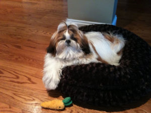 Shih Tzu top knot accessories