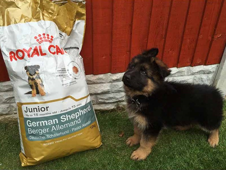 What Is The Best Dry Dog Food For German Shepherds