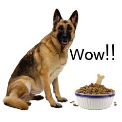 Top Dog Food Brands For German Shepherds