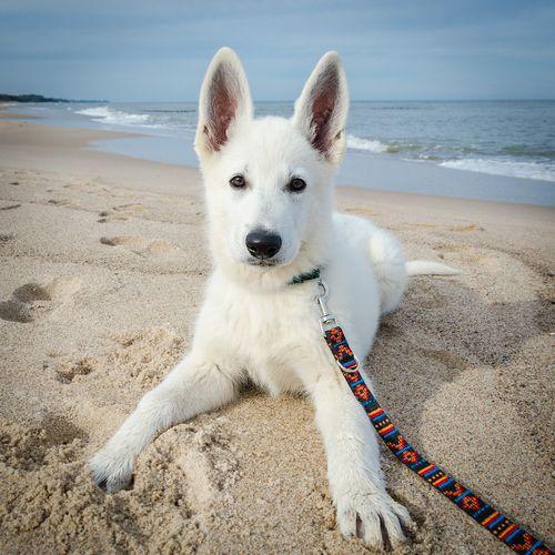 Choosing A Good Dogs Name