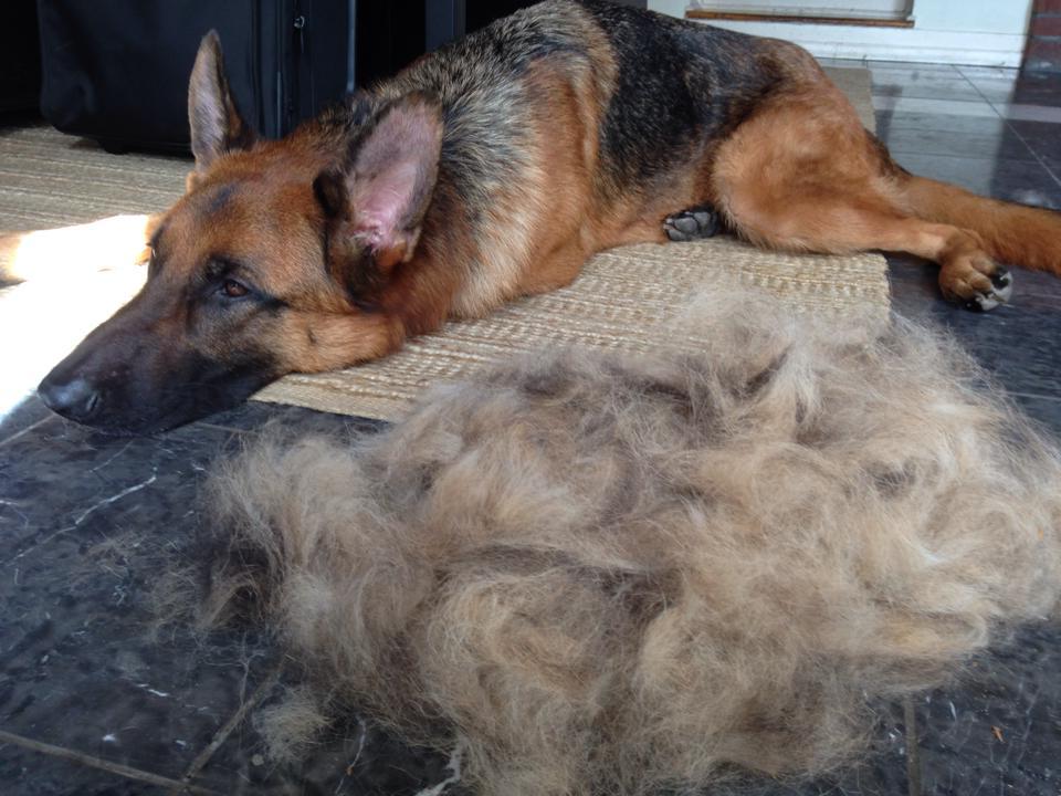 Dog Hair Best Brush