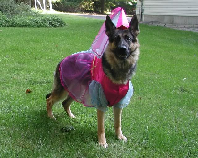 Great German Shepherds Army Adorable Dog - german-shepherd-halloween-costumes  HD_55701  .jpg