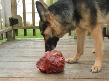 German Shepherd Raw Food Diet Plan