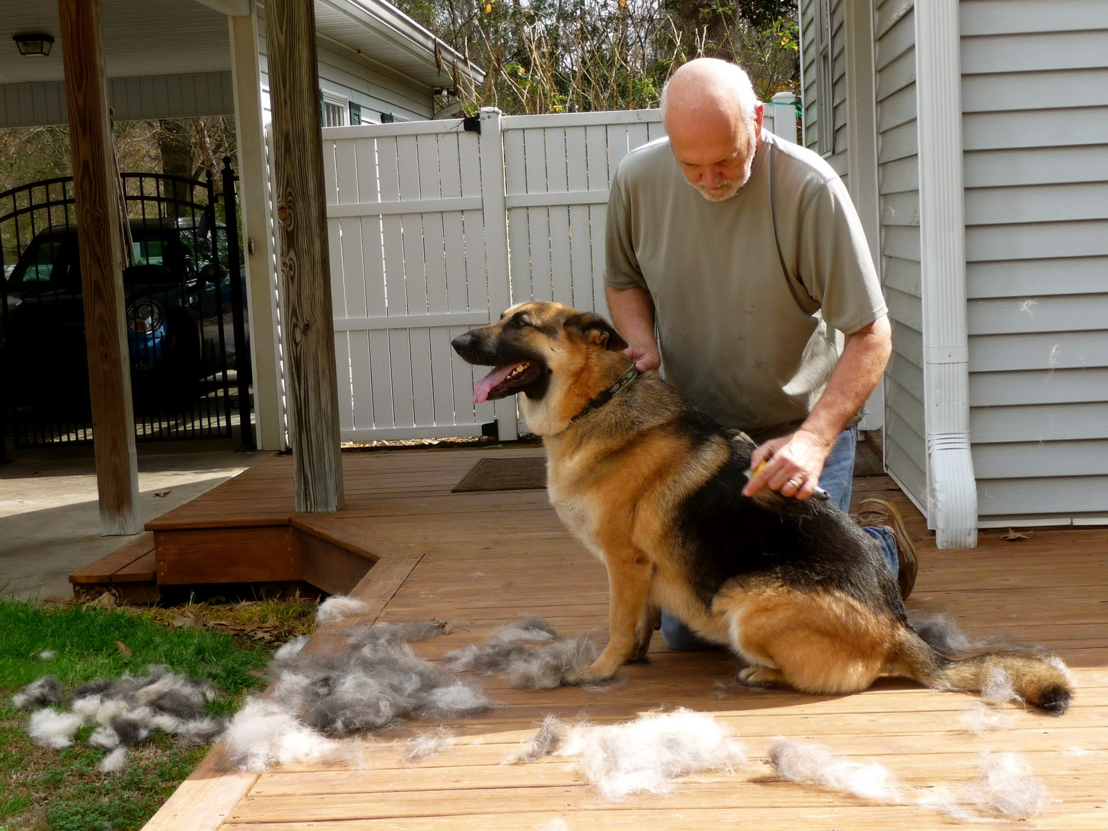 do German Shepherds shed