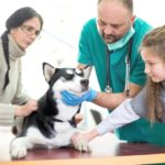 Follicular dystrophy dysplasia Husky