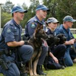 German Shepherd attack training police
