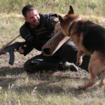 German Shepherd trained to attack