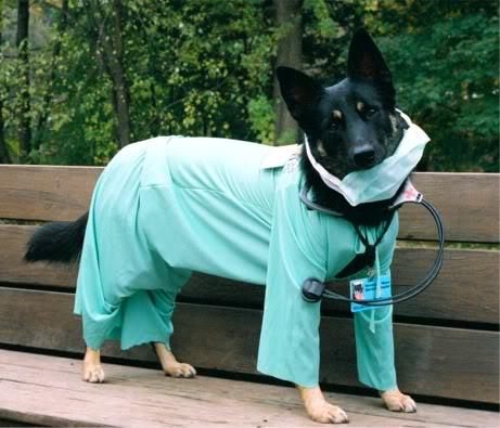 heartworm treatment for German Shepherds