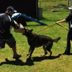 how to train a German Shepherd to attack