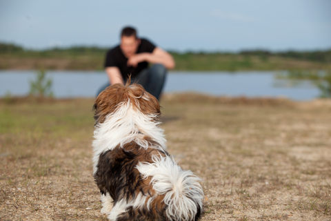 Shih Tzu training commands