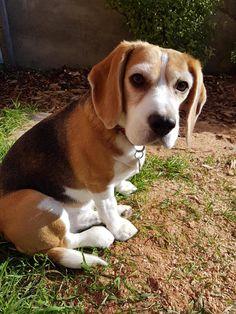 Beagle buddy potty reviews