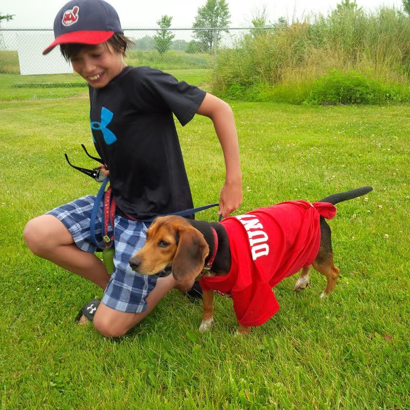 Beagle characteristics facts