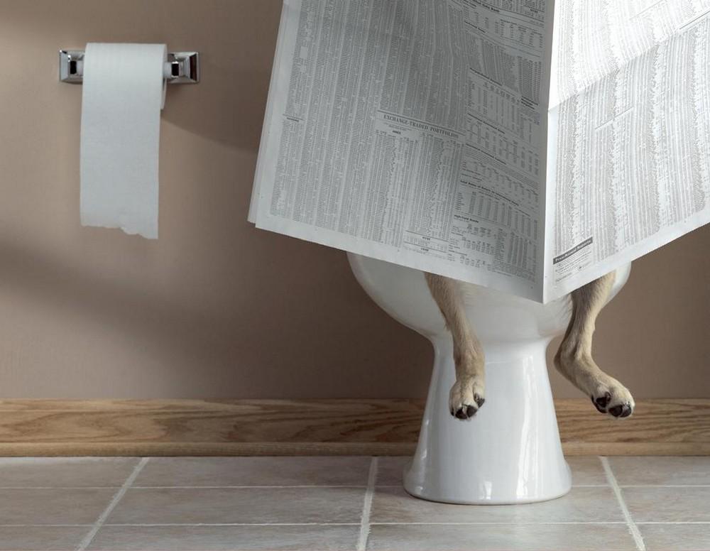 Beagle diarrhea blood