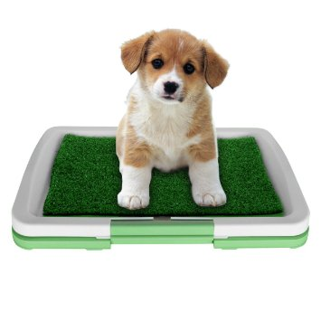 Beagle hard to potty train