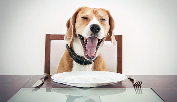 Beagle homemade food