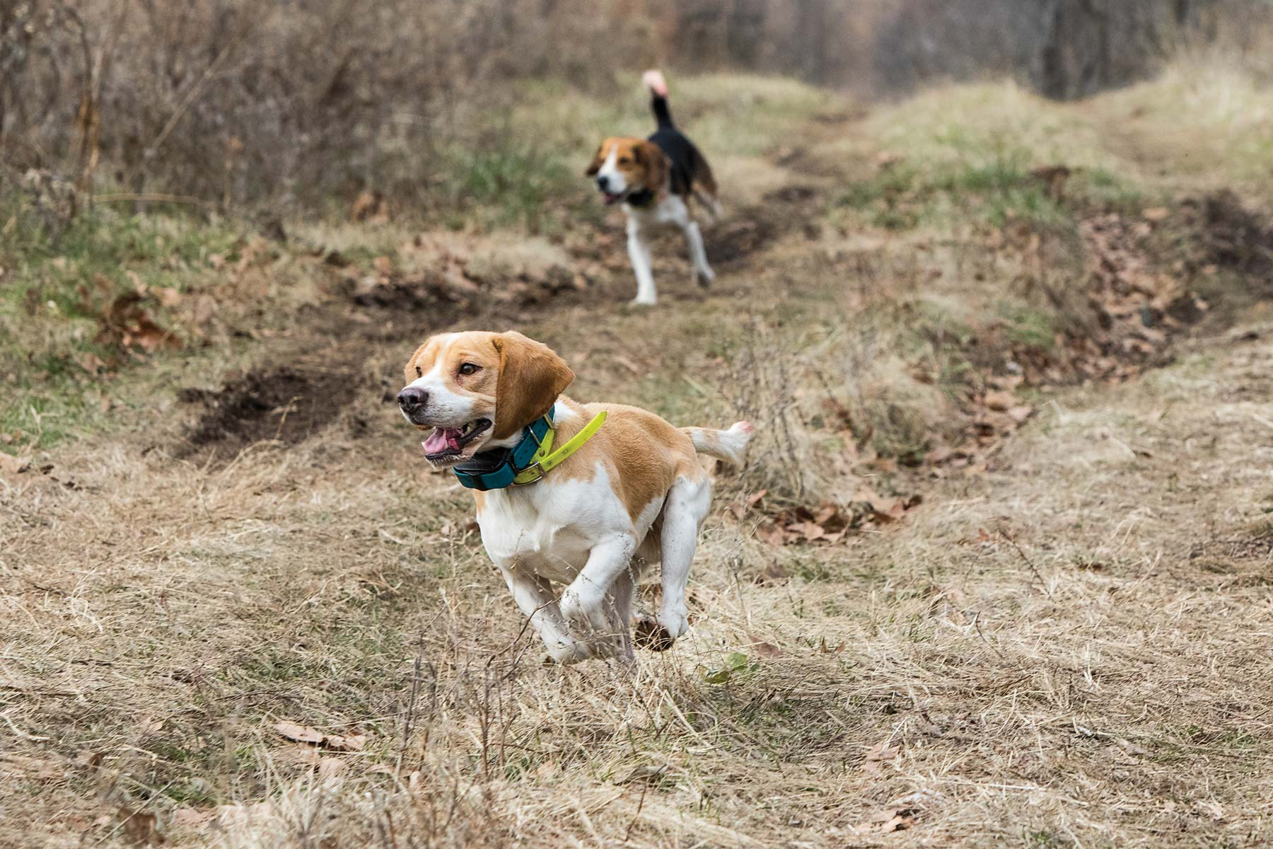How To Train A Puppy To Be A Hunting Dog