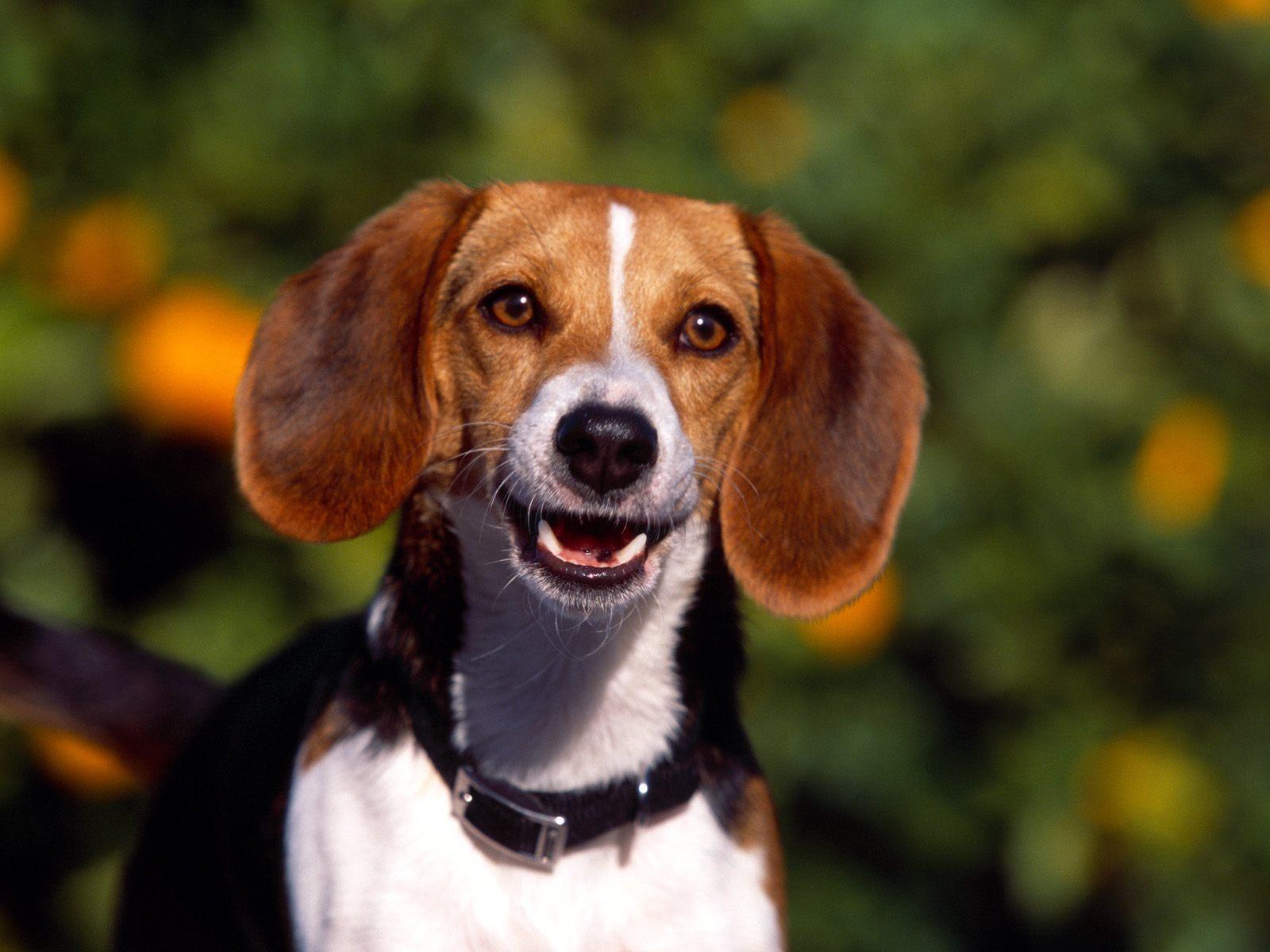 Best Beagle names female