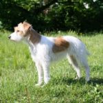 Boy dog names for jack russell terriers
