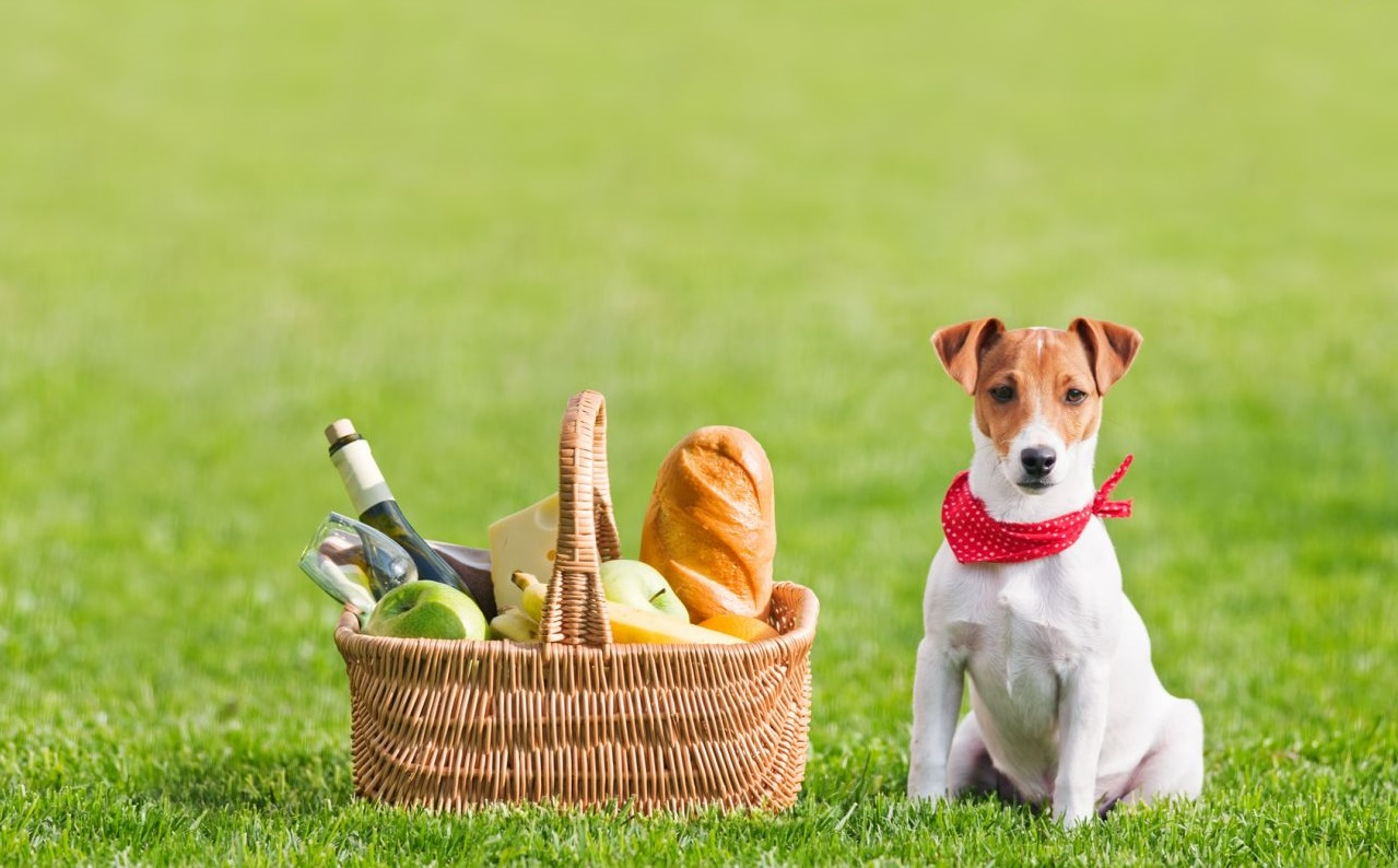 Can jack russell terrier eat bananas