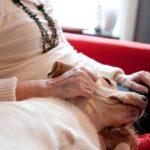 Caring for a pregnant labrador retriever