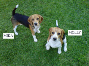 Cool female Beagle names