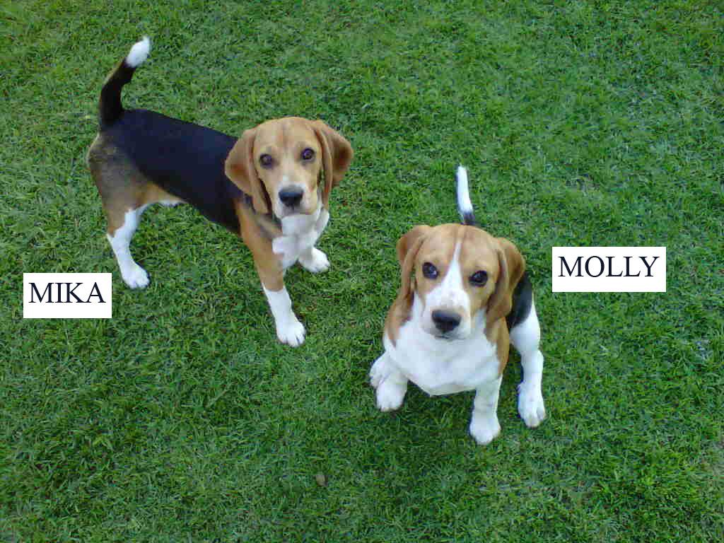 Cool female Beagle names
