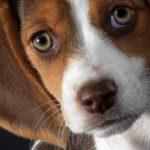 Cute Beagle names female