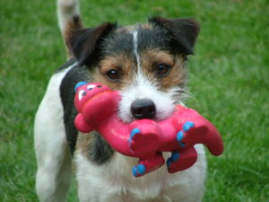 Cute dog names for jack russell terriers