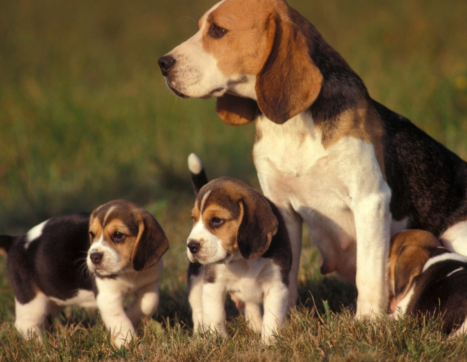 Cute names for girl Beagle puppies