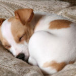 Cute names for jack russell terriers