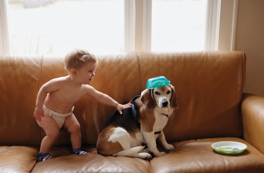Dog names for a male Beagle