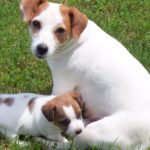 Female dog names for jack russell terriers