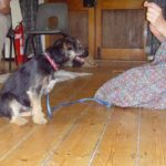 Potty training a jack russell terrier