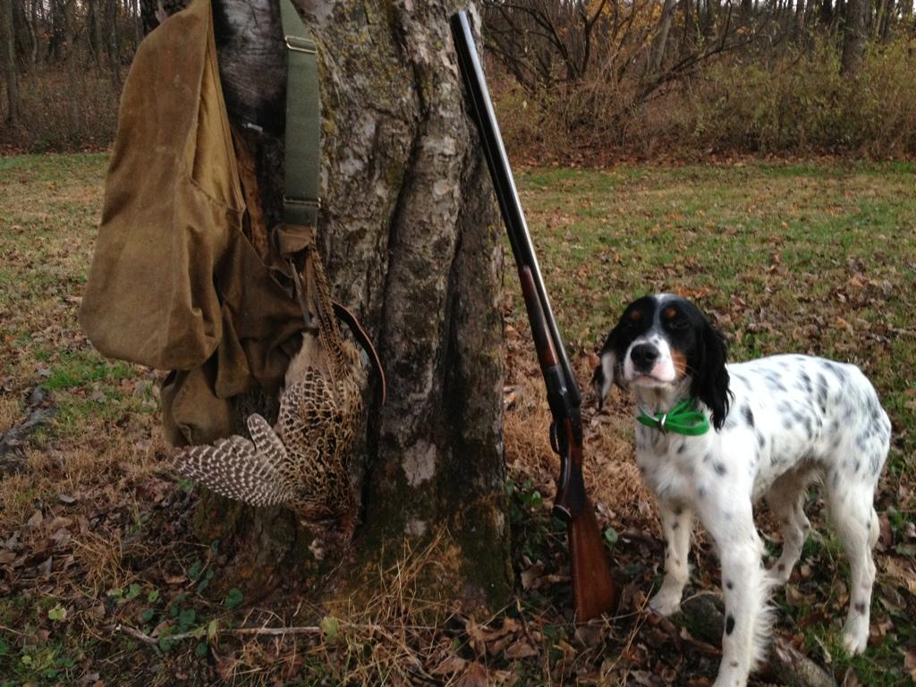 Training a Beagle to hunt birds