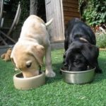 Best dog food for labrador retriever puppies
