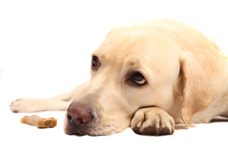 Best dog food for labrador retrievers with allergies