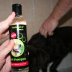 Best dog shampoo for labrador retrievers