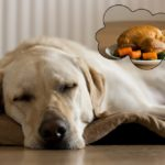 Best food for labrador retriever
