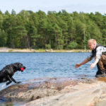 Dog training tips labrador retriever