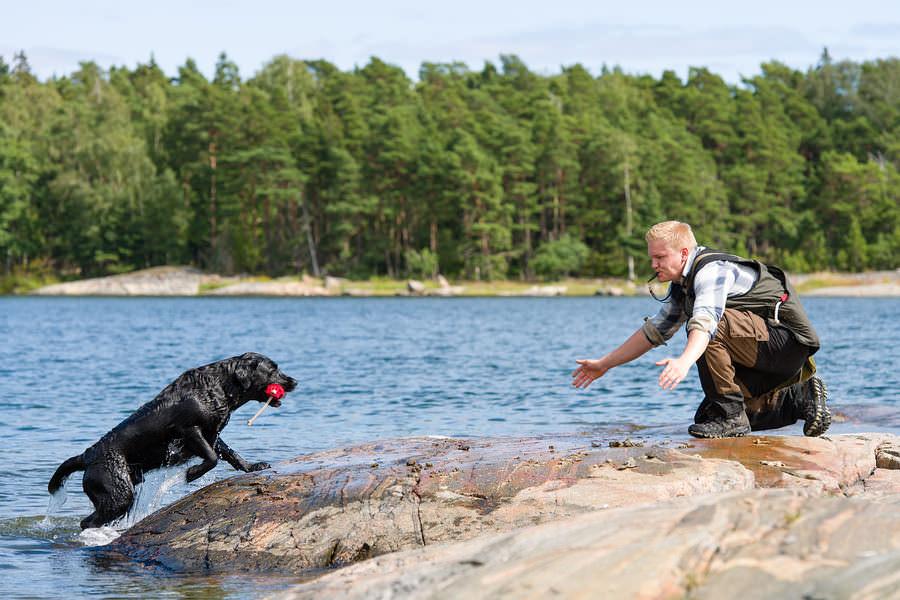 Dog training tips labrador retriever