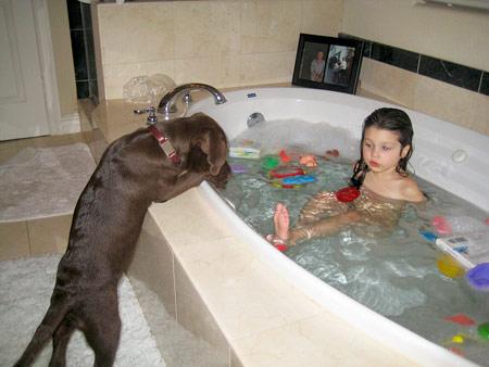 Labrador retriever bathing how often