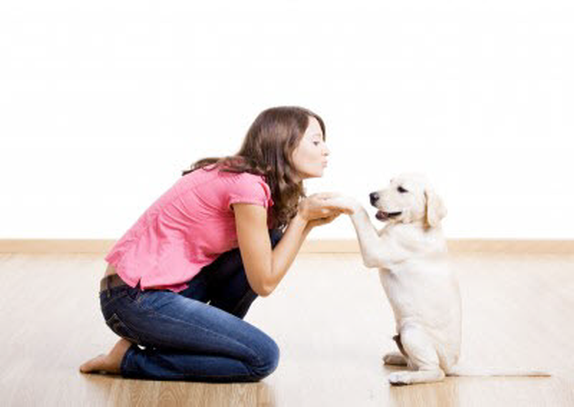Labrador retriever puppies training tips