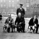 American Pitbull terrier history