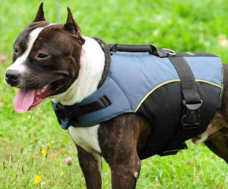 American pitbull terrier weight vest